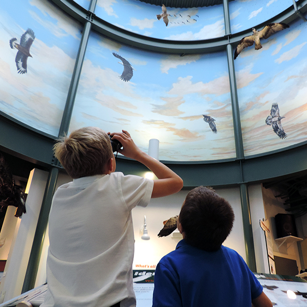 Masters of the Sky @ National Eagle Center