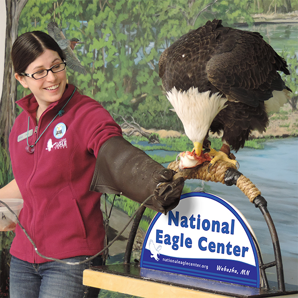 Live Eagle Program @ National Eagle Center